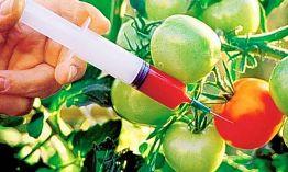 gensko spremenjeni organizmi